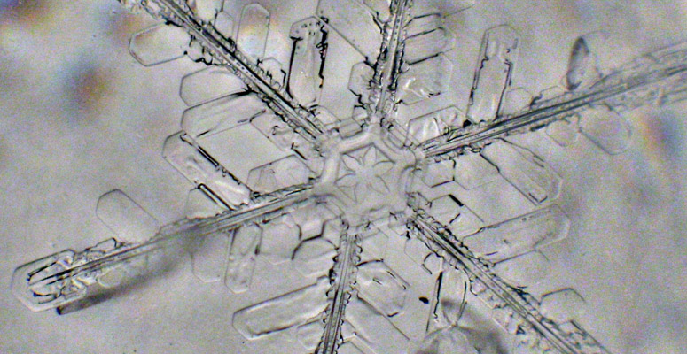 An ice crystal up close