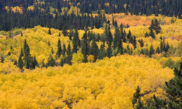 Autumn in Colorado by Caryle Calvin