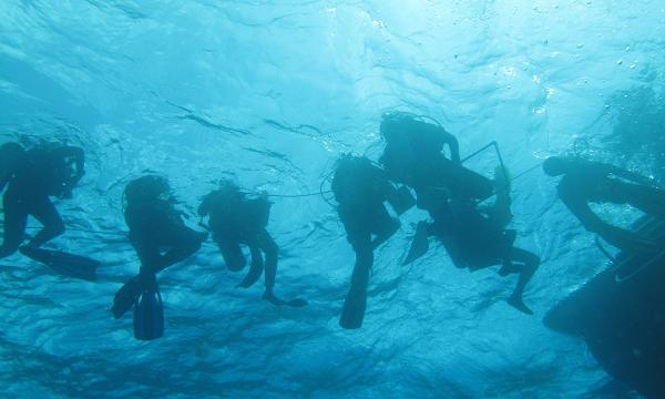 REU students in the BIOS program go scuba diving in Bermuda to collect data